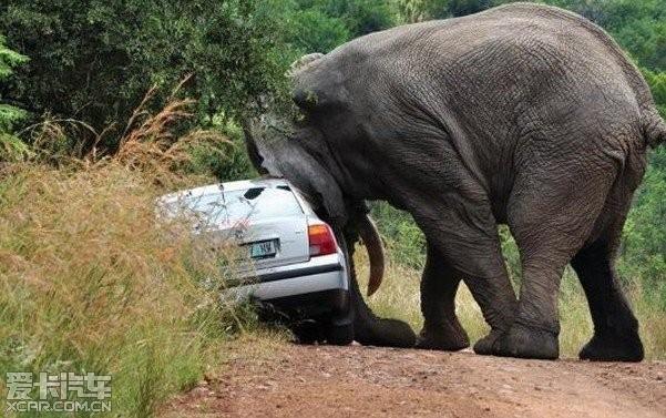 大象 动物 601_377