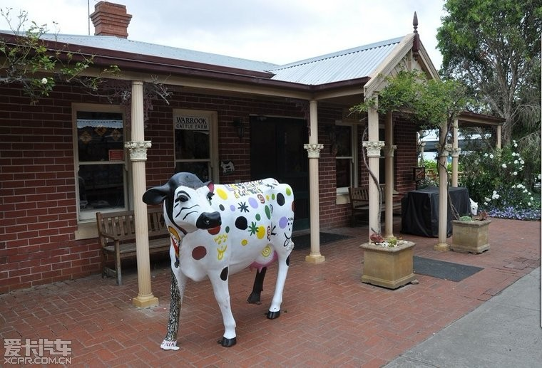 墨尔本羊毛半日游。剪牛奶,看狗v羊毛,挤欧美,草视频熊农场胖同性走图片