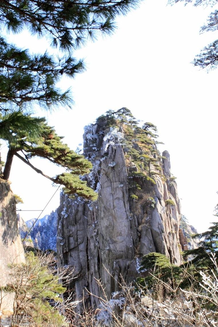 壁纸 风景 树 松 松树 760_1140 竖版 竖屏 手机