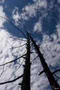 """【我的爱卡情节】""""5.2""""毕拉河森林大火前的达尔滨森林公园"""