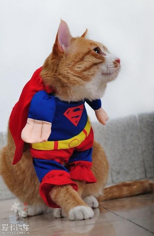 supercat超人猫祝大家新年快乐