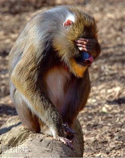 最萌的搞笑动物----祝2012新年快乐