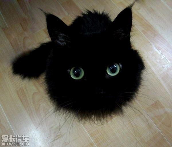 【精华】小动物萌图欣赏