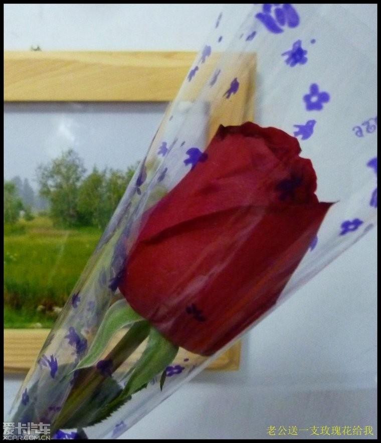 送一支玫瑰花简谱展示