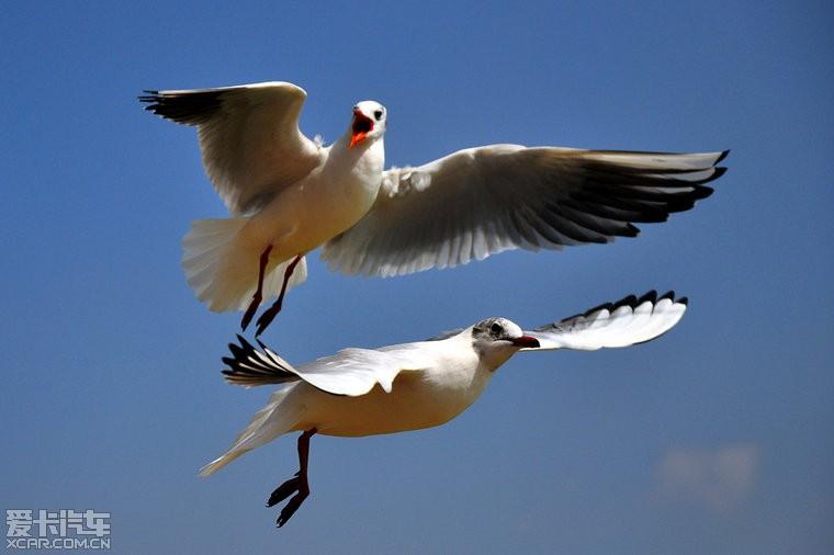 海埂滇池昆明美食D90拍公园+送公园海鸥大众三里屯妹妹六人点评图片