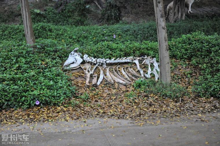 > 广东行【中篇】——长隆野生动物园