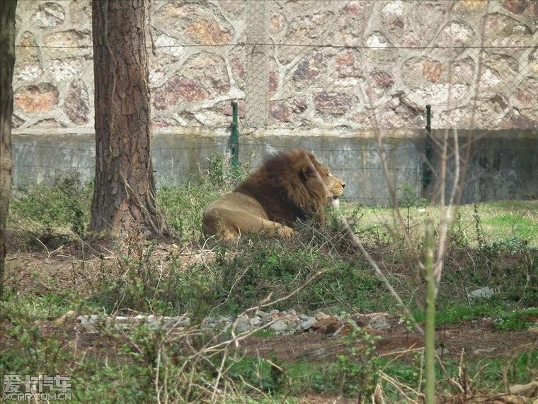 九峰森林动物园一日游记~~~