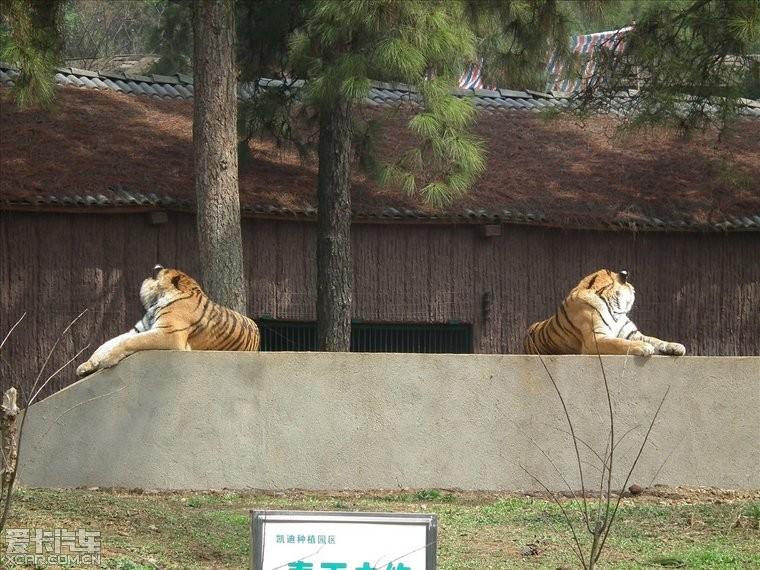 > 九峰森林动物园一日游记