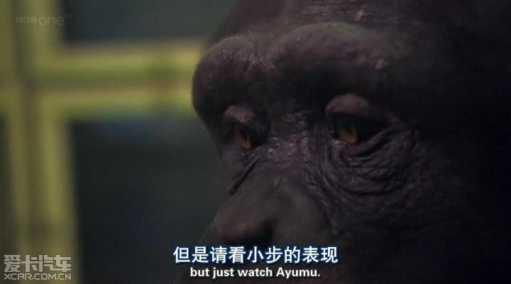 推荐个纪录片《小动物大智慧》