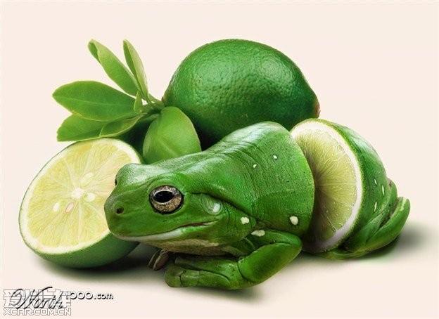ps水果动物图片