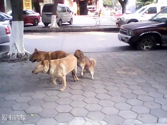 公路边大白天做爱_> 一家三口居然在马路边做爱
