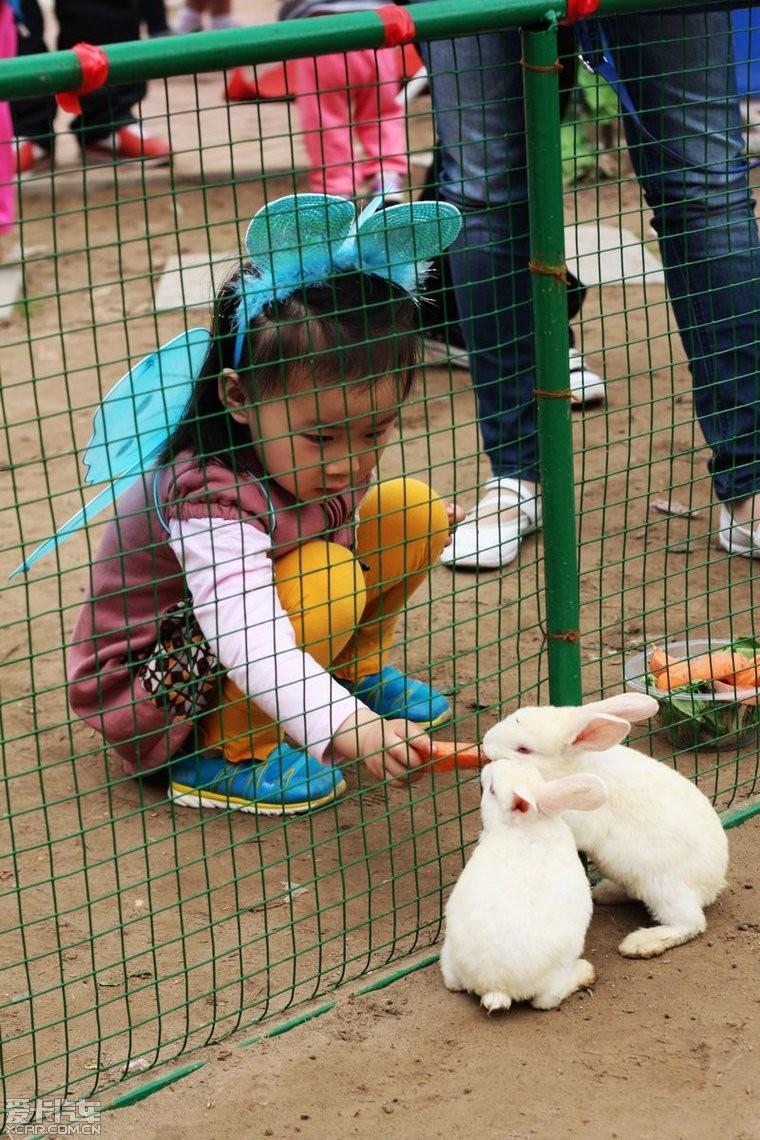 这在儿童动物园区喂小动物,胡萝卜 菜叶子10元一碗.随便喂.