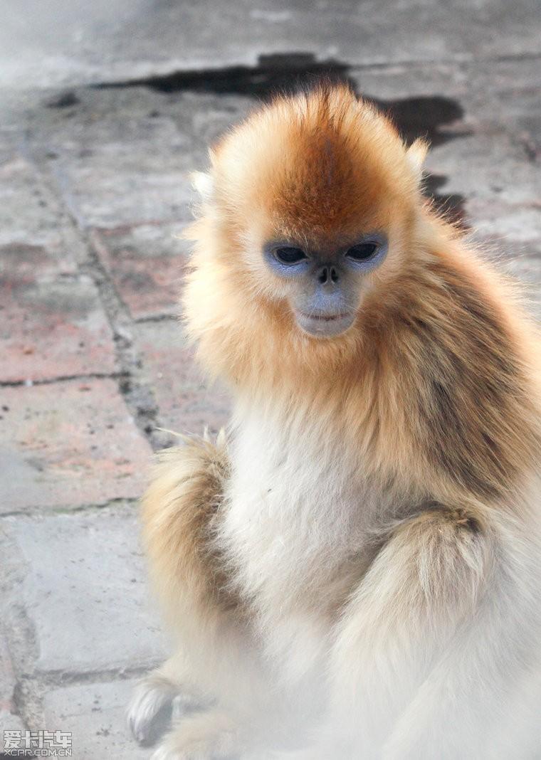 陕西开展打击破坏秦岭野生动物资源违法犯罪行动