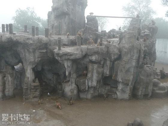 端午节,去野生动物园看动物,雨中漫步.(同发宝马3)