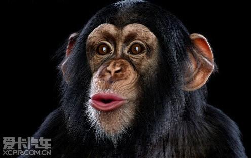 撅嘴动物图片可爱
