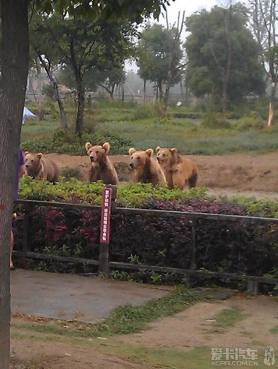 【精华】常州野生动物园自驾游