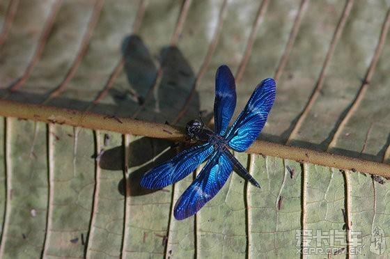 厄瓜多尔亚苏尼国家公园的动物(组图)
