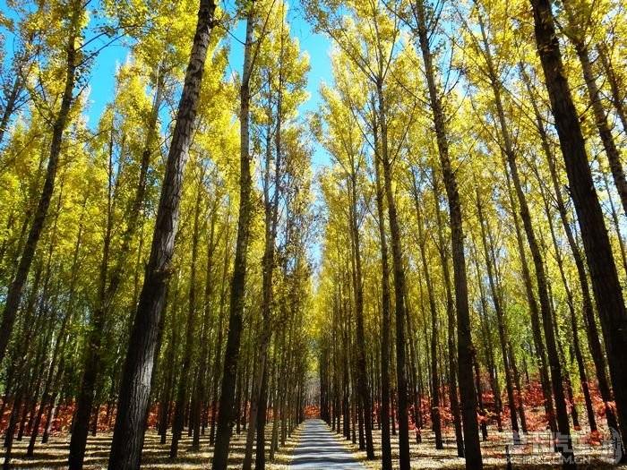 秋天枫叶中的林间小路_乐乐简笔画图片
