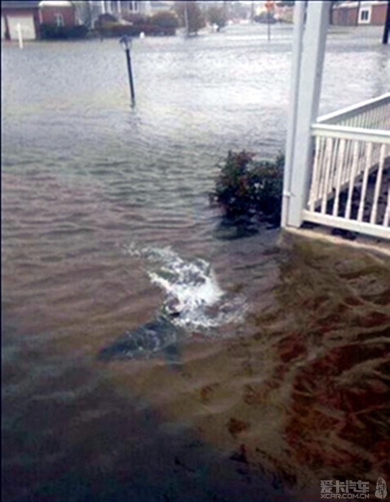 纽约现在正飓风 洪水灌入地铁 鲨鱼在街上游