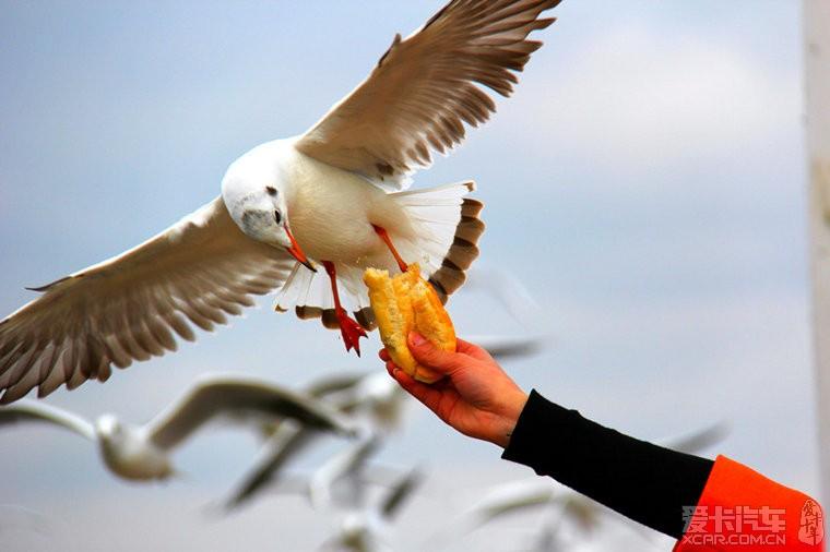 周末小憩,去咱们海埂昆明草莓观鸥、采大坝、孔家庄张家口美食图片