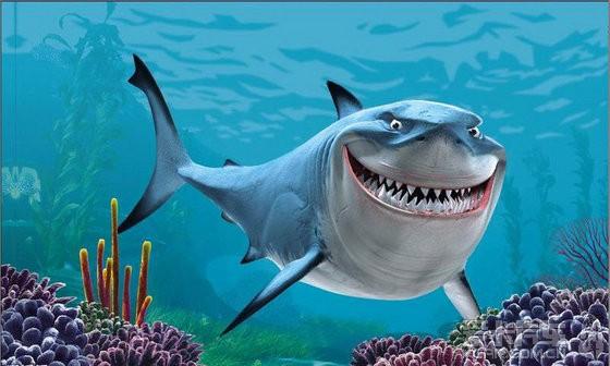 浸泡鲨鱼鳍!(560x336,54k)-鲨鱼 鲨鱼图片 春假之鲨鱼袭击
