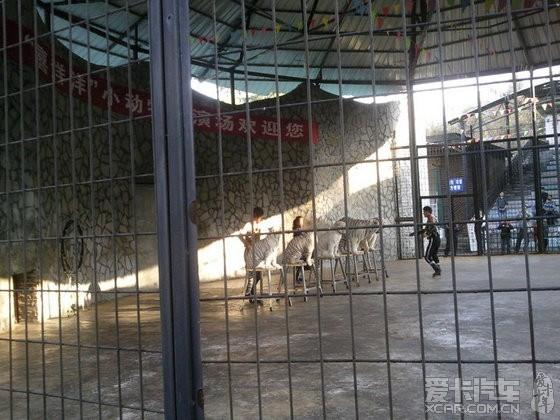 贵阳森林野生动物园位于贵阳市修文县扎佐镇贵州省扎佐林场内 , 占地面积约 5000 亩,总投资约 1.6 亿元人民币。园区地处川黔铁路交汇处,距贵阳仅 35 公里。园内饲养200多种5000多头(只)野生动物,以野生动物和森林景观的展示观赏为主线,集野生动物迁地保护、科普教育、繁育生产、科学研究和休闲娱乐为一体。园区分珍稀动物园、动物表演场、大型动物散放区、鸟类园区、科普馆、儿童动物园及大型游乐场等.