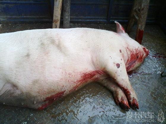 红薯雕刻动物猪