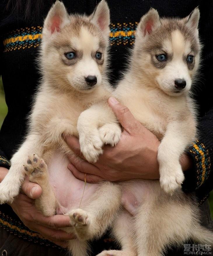 一群可爱的小狗狗_小宠生活