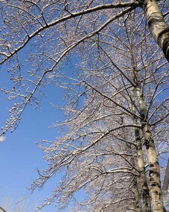 每一颗大树的成长,要接受阳光,也要包容风雨.