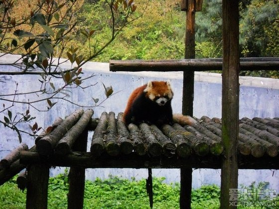 佐森林野生动物园游记
