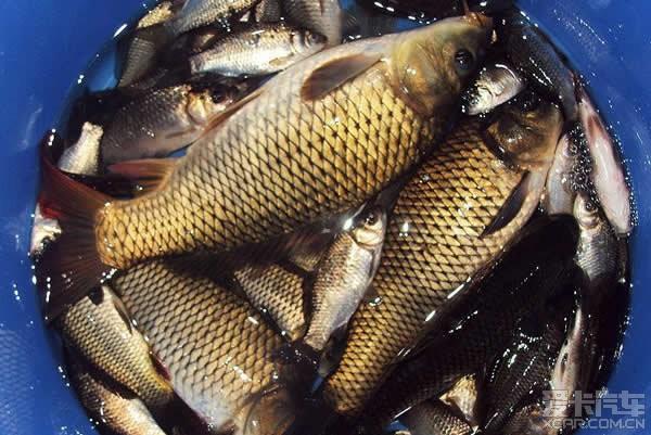 钓野鱼,观月牙---怀柔小记湾自助攻略-爱卡钓鱼试剑之炼野鸭图片