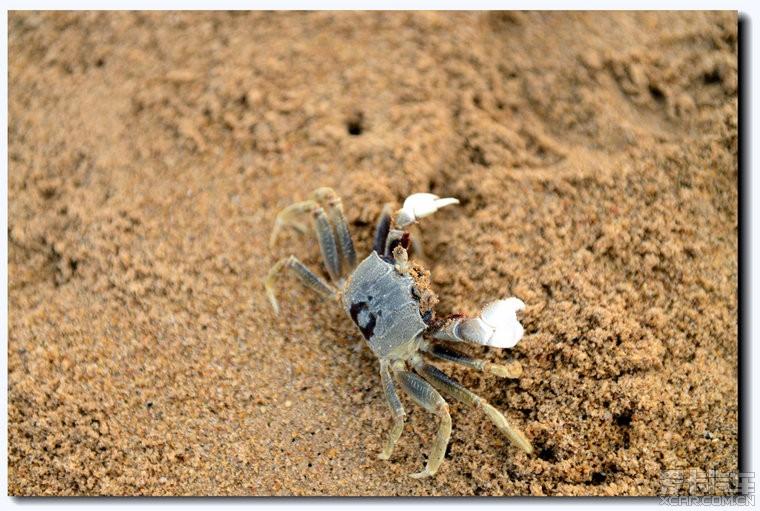 假日海滩上的小螃蟹!