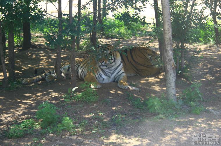 > 北京八达岭野生动物园一日游