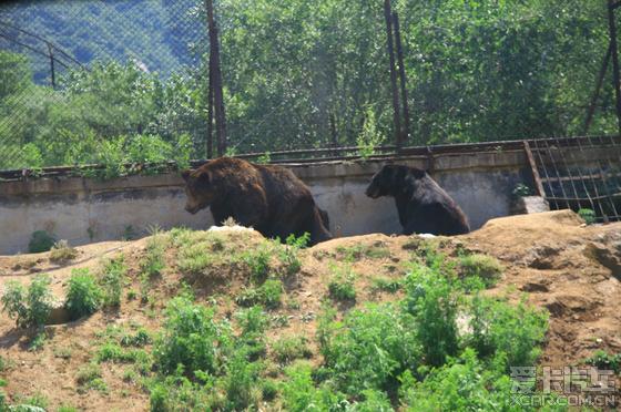 北京八达岭野生动物园一日游