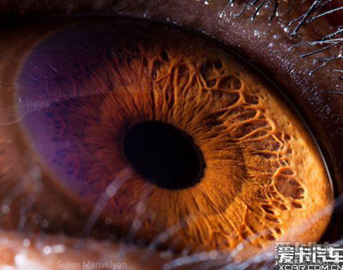动物眼睛特写