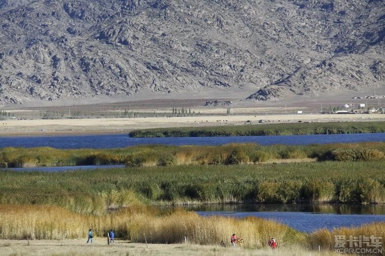 摘自网上:从富蕴前往可可托海32公里处,有一片湿地沼泽,因湖中芦苇、香蒲丛生,野鸭成群,故名鸭泽湖,又叫野鸭湖、可可苏海。野鸭湖位于可可托海南侧,同为富蕴地震断裂带断陷盆地里的湖泊洼地,海拔132米,湖面约2平方公里。野鸭湖既有西湖的精致秀美,又有白洋淀的苇荡迷宫,一派沙鸥翔集、鱼翔浅底的水乡泽国美景。最为奇特的是,在湖的中央有成片的芦苇是在水上漂浮一般,大大小小有20多片,当地居民说水中的芦苇是直接长在水上没有根的,随风漂流,可谓是风一场,景一场