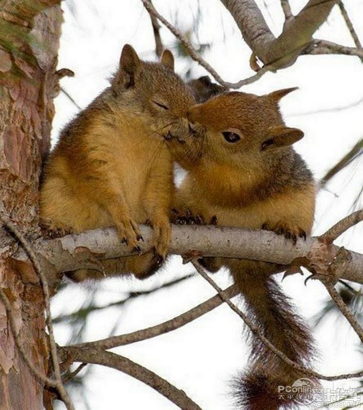 动物情侣温情接吻秀恩爱