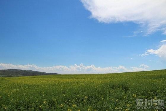 塔城小麦地图片