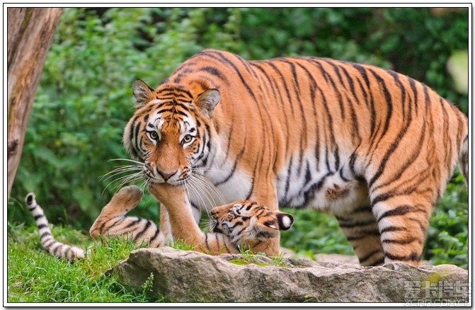 动物世界:母爱无私【第二季】