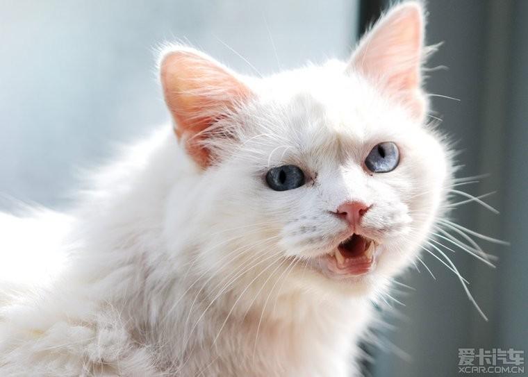 猫眼球摘除手术步骤图