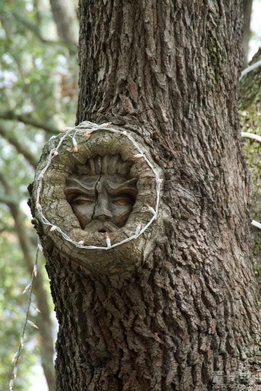 > 树木雕刻艺术