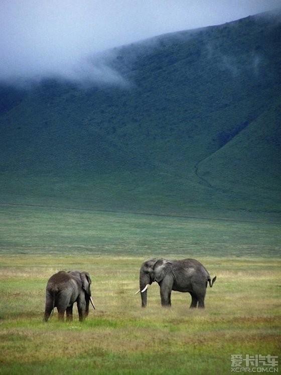 炎热的非洲,不怕热的动物
