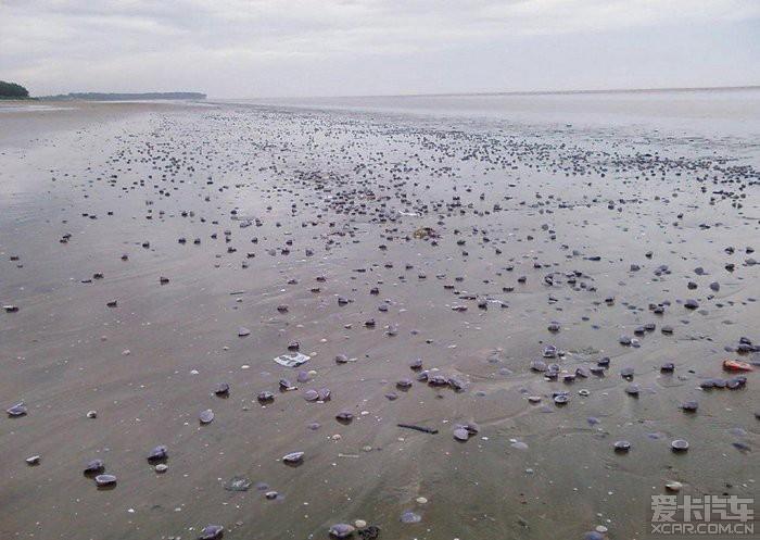 全球最美海滩 全球最开放天体海滩 世界上最美的海滩图片图片