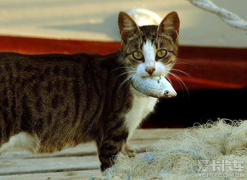 猫妈妈叼着小猫走电线,下面热闹非凡但她顾不上看一眼
