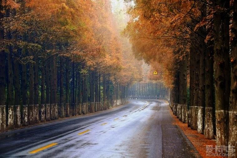 秋天林荫大道落叶的风景 思锐论坛 比亚迪论坛 XCAR 爱卡汽车俱乐部高清图片