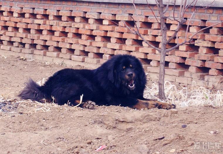我的狗美女宝贝儿们---男女、帅哥一起来_北京明星美女开车的图片