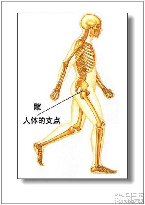 女人体全身器官�_彩图详解男,女人体器官及病理!