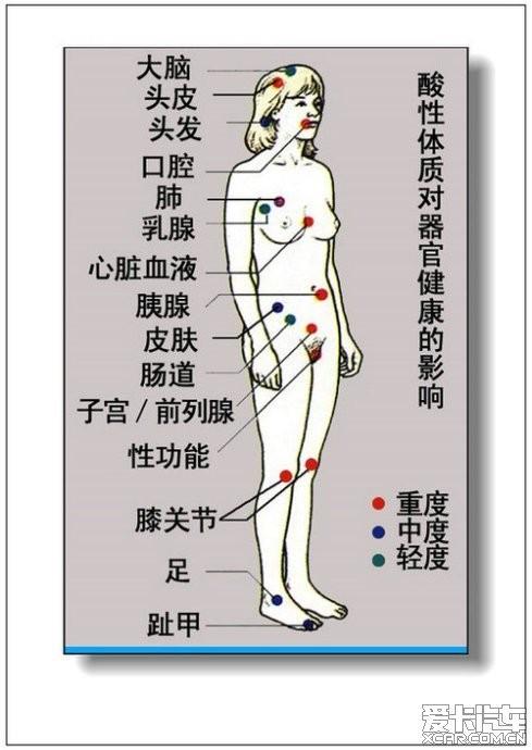 男性身体器官图 男性身体器官结构图