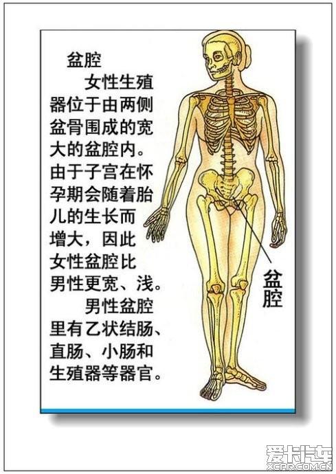 女人体全身器官�_> 男人,女人体器官及病理(彩图详解)