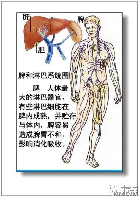 女人体全身器官�_男人,女人体器官及病理(彩图详解)